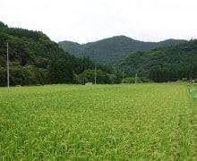 countryside---akita